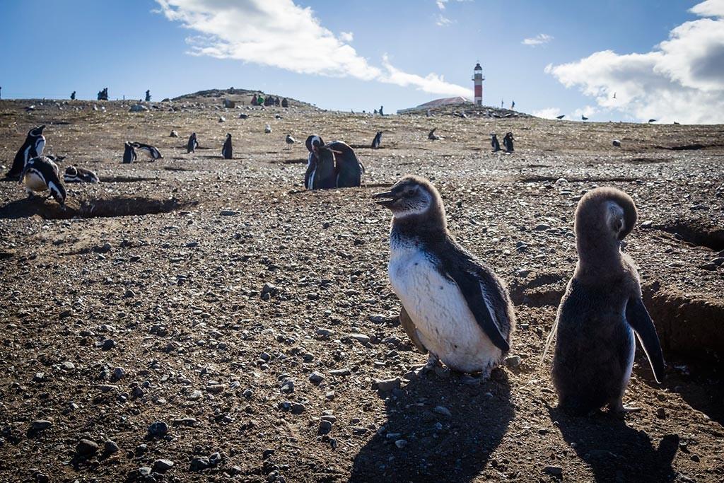 Passeio na Isla Magdalena - Pinguins!