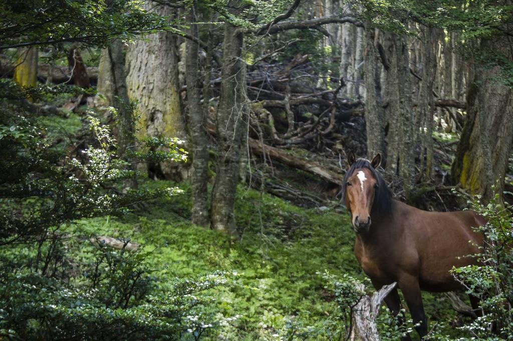 cascada-de-los-amigos-08-cavalo-na-trilha