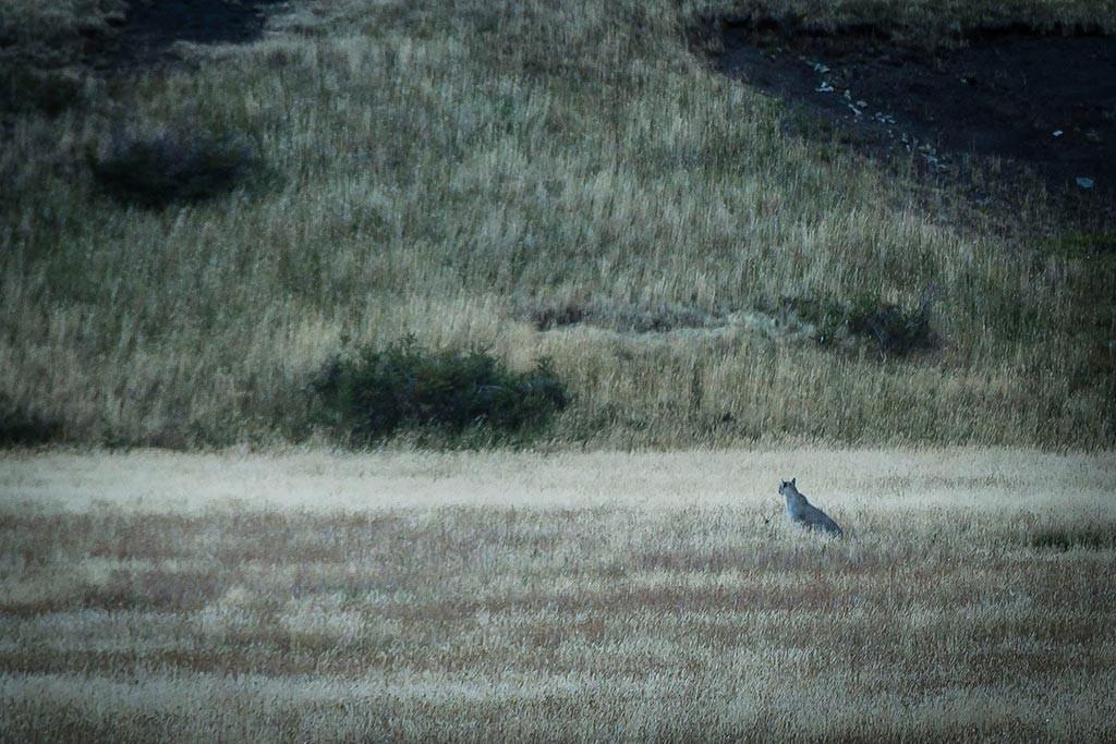 Torres del Paine - Acampamento Serón - Puma
