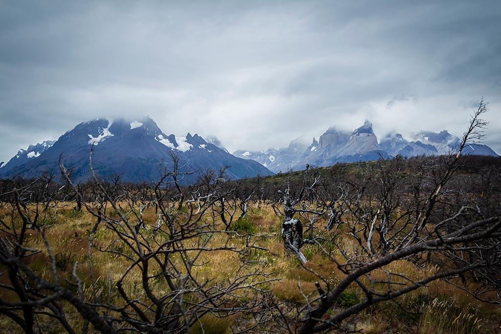 Torres del Paine - Trilha Carretas para Paine Grande - Área Incendiada com Paine Grande e Cuernos ao fundo