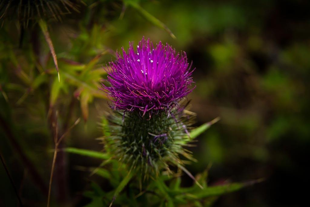 Torres del Paine - Trilha Sede Administrativa para Carretas - Flora