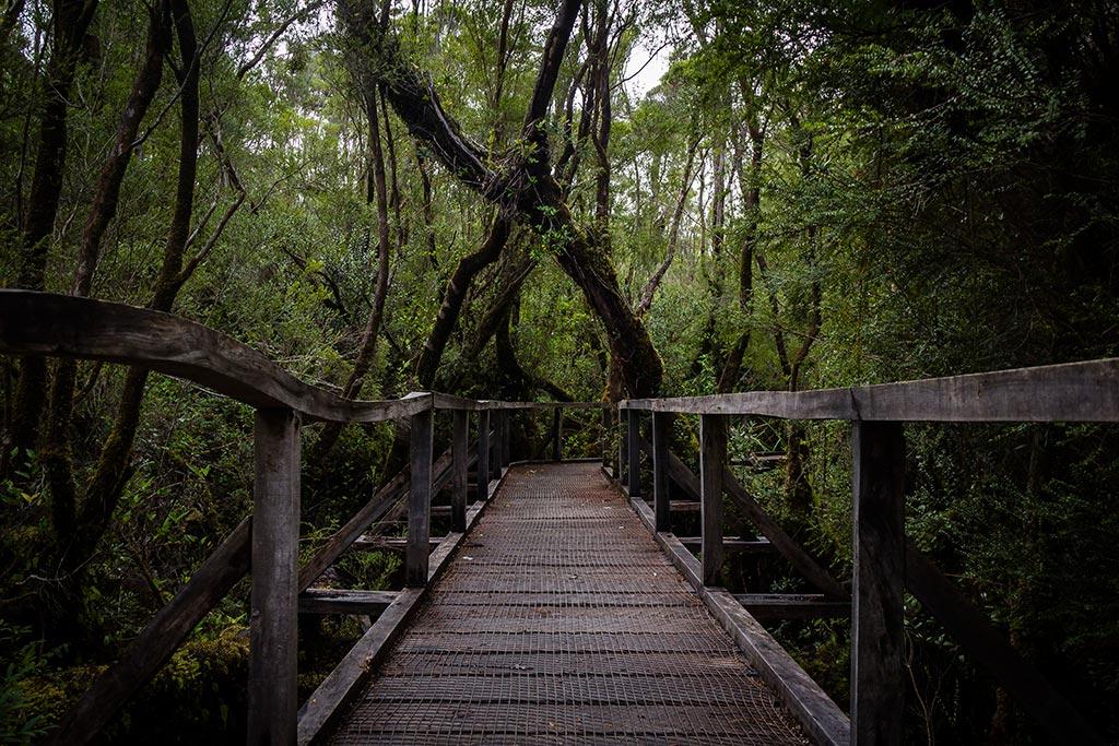 Isla de Chiloé - Parque Nacional Chiloé - Cucao - Passarelas 2