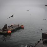 Valdivia - Feira Fluvial - Lobos e leões marinhos