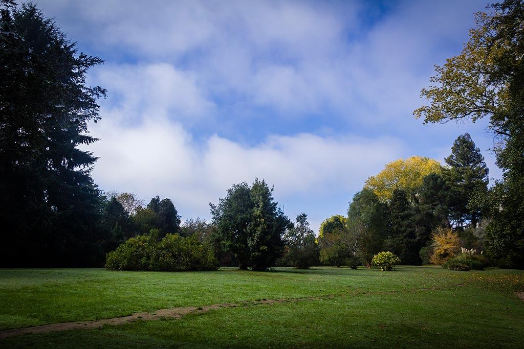 Valdivia - Jardim botânico - A grama e o céu