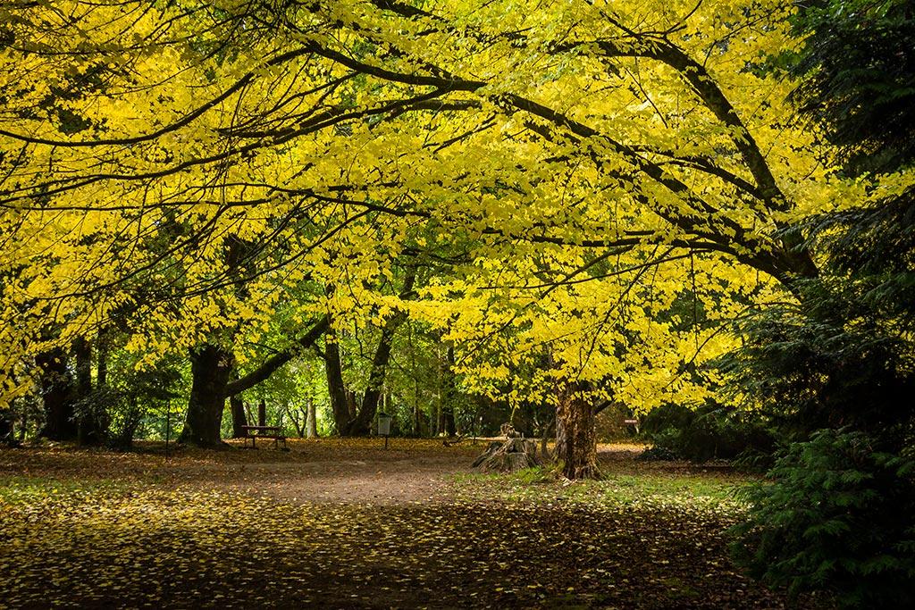Valdivia - Jardim botânico - O outono chegou