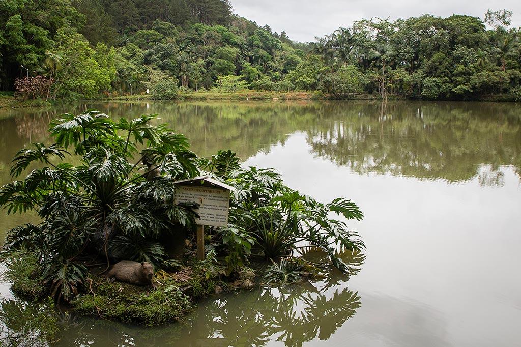 Couchsurfing Jaraguá - Parque Malwee - Capivaras