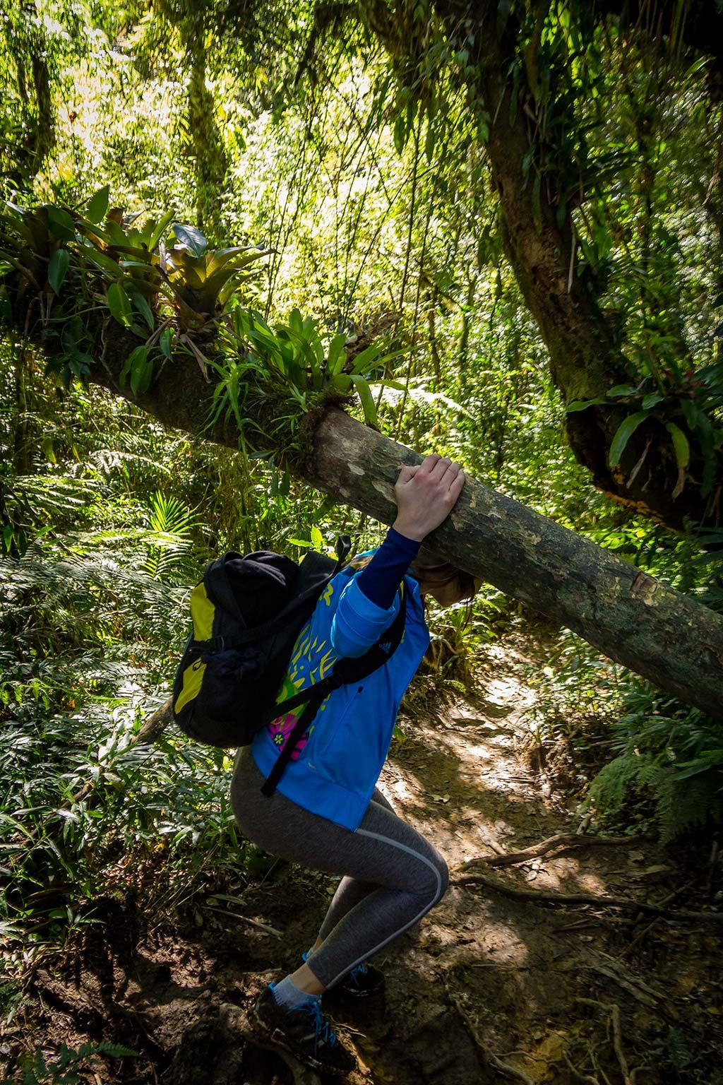 Trekking Castelo dos Bugres - Lari passando pelo tronco