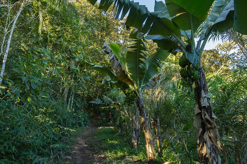 Pedal e Trekking Morro Pelado - Schroeder - Bananeiras na trilha