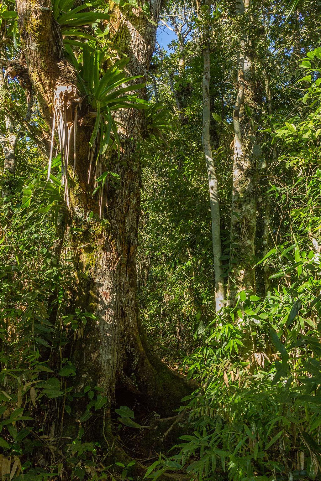 Pedal e Trekking Morro Pelado - Schroeder - Vegetação local 2