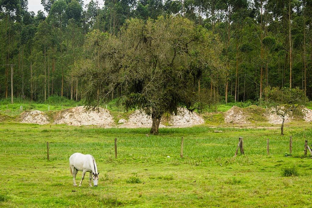 Cicloturismo litoral norte de SC - Dia 3 - Cavalo pastando em Araquari