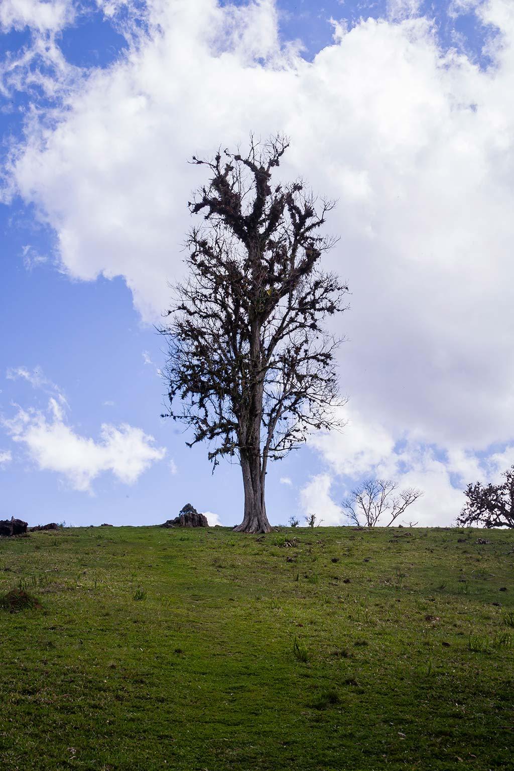 Circuito Vale Europeu - Dia 3 - Rio dos Cedros - Árvore no campo da Cachoeira Gruta do Índio