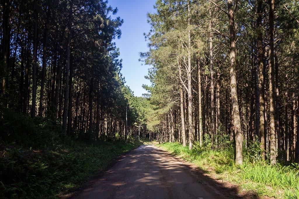 Circuito Vale Europeu - Dia 3 - Rio dos Cedros - Plantação de Pinus