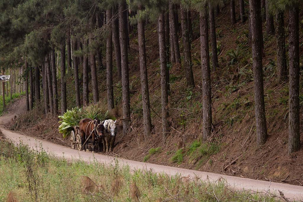Circuito Vale Europeu - Dia 4 - Doutor Pedrinho - Carroça e árvores