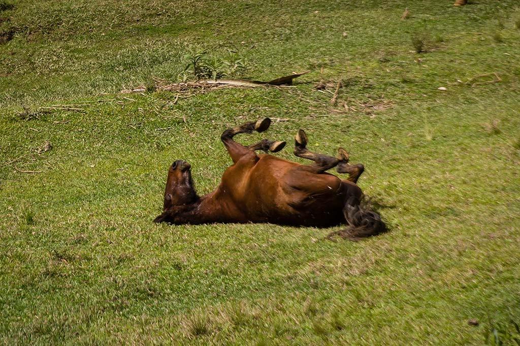 Circuito Vale Europeu - Dia 4 - Doutor Pedrinho - Cavalo se coçando