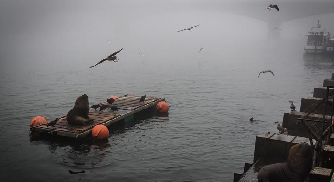 Roteiro em Valdívia: dos lobos marinhos às folhas de outono